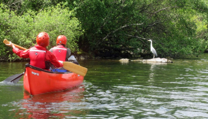 Photo of kids in a canoe looking at a heron