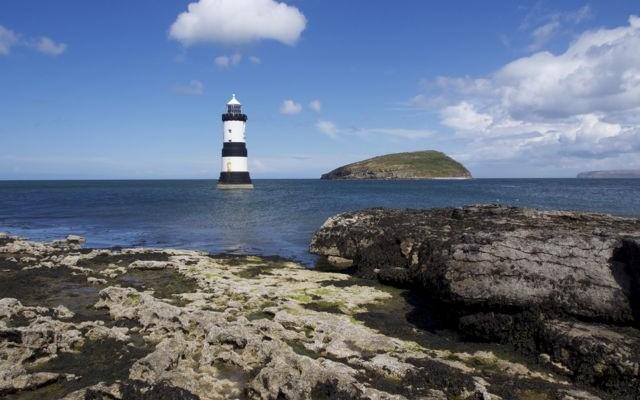 puffin island picture